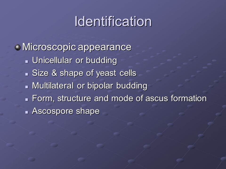 Identification Microscopic appearance Unicellular or budding Unicellular or budding Size & shape of yeast cells Size & shape of yeast cells Multilater