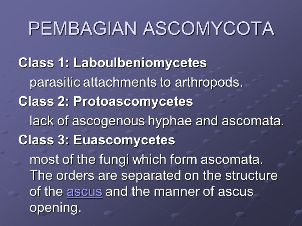 PEMBAGIAN ASCOMYCOTA Class 1: Laboulbeniomycetes parasitic attachments to arthropods.
