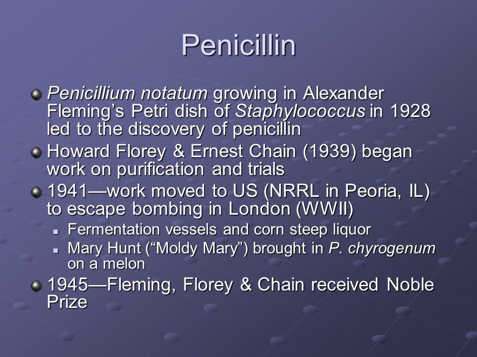 Penicillin Penicillium notatum growing in Alexander Fleming's Petri dish of Staphylococcus in 1928 led to the discovery of penicillin Howard Florey & Ernest Chain (1939) began work on purification and trials 1941—work moved to US (NRRL in Peoria, IL) to escape bombing in London (WWII) Fermentation vessels and corn steep liquor Fermentation vessels and corn steep liquor Mary Hunt ( Moldy Mary ) brought in P.