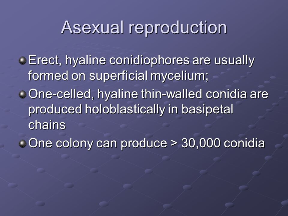 Asexual reproduction Erect, hyaline conidiophores are usually formed on superficial mycelium; One-celled, hyaline thin-walled conidia are produced holoblastically in basipetal chains One colony can produce > 30,000 conidia