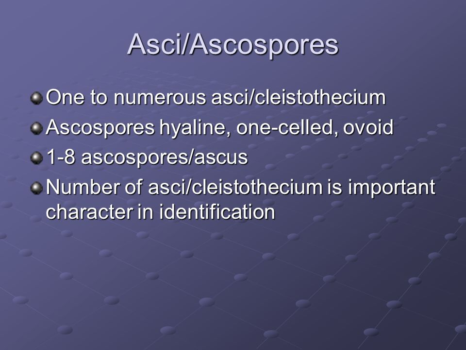 Asci/Ascospores One to numerous asci/cleistothecium Ascospores hyaline, one-celled, ovoid 1-8 ascospores/ascus Number of asci/cleistothecium is import