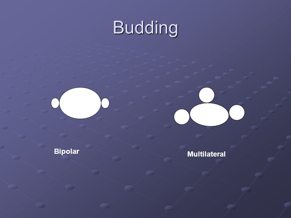 Budding Bipolar Multilateral