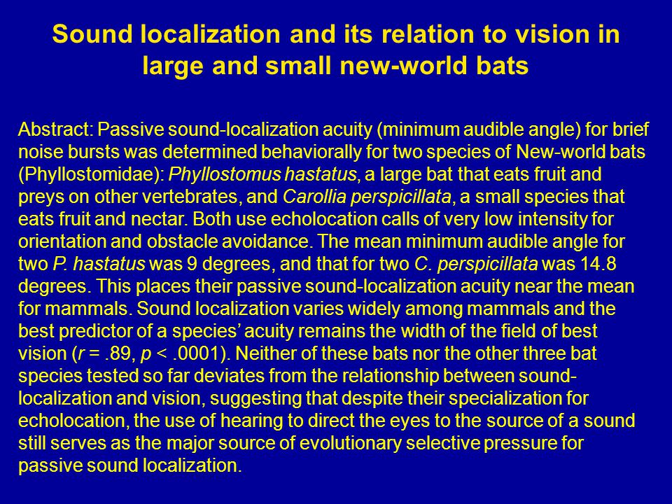Sound localization and its relation to vision in large and small new-world bats Abstract: Passive sound-localization acuity (minimum audible angle) for brief noise bursts was determined behaviorally for two species of New-world bats (Phyllostomidae): Phyllostomus hastatus, a large bat that eats fruit and preys on other vertebrates, and Carollia perspicillata, a small species that eats fruit and nectar.