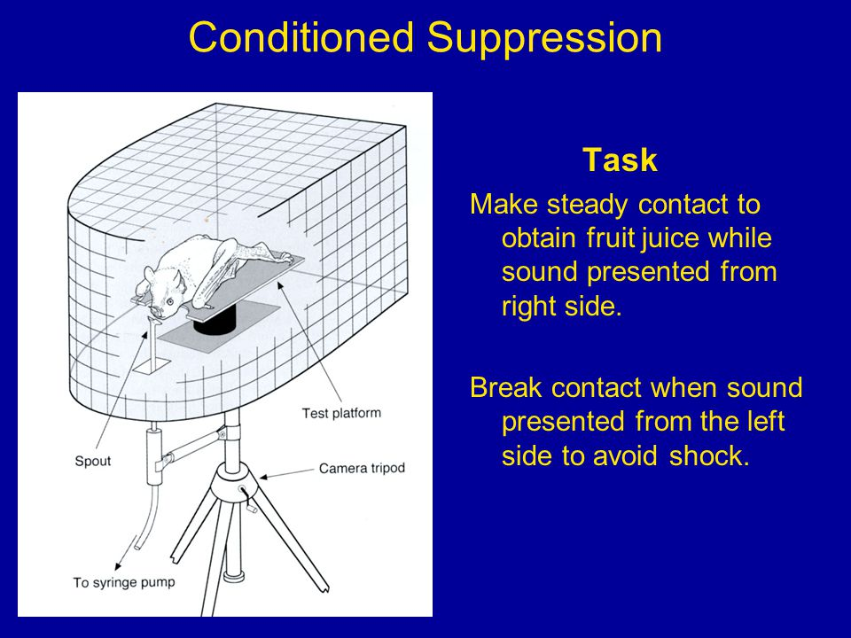 Conditioned Suppression Task Make steady contact to obtain fruit juice while sound presented from right side.