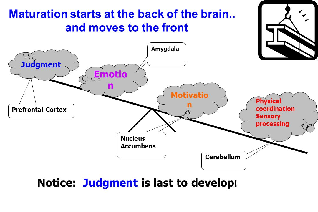 Motivatio n Emotio n Judgment Cerebellum Amygdala Nucleus Accumbens Maturation starts at the back of the brain..