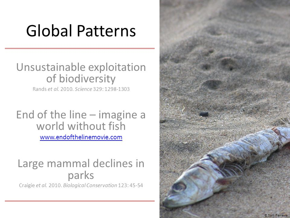 Global Patterns Unsustainable exploitation of biodiversity Rands et al. 2010. Science 329: 1298-1303 End of the line – imagine a world without fish ww
