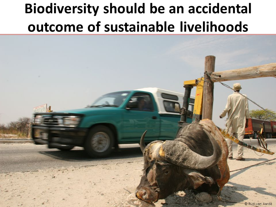 Biodiversity should be an accidental outcome of sustainable livelihoods © Rudi van Aarde