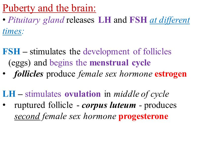 Puberty and the brain: Pituitary gland releases LH and FSH at different times: FSH – stimulates the development of follicles (eggs) and begins the menstrual cycle follicles produce female sex hormone estrogen LH – stimulates ovulation in middle of cycle ruptured follicle - corpus luteum - produces second female sex hormone progesterone