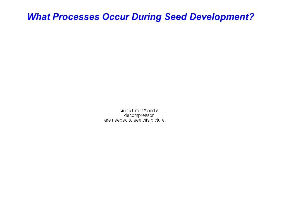What Processes Occur During Seed Development?