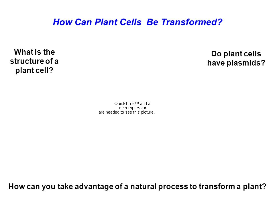 How Can Plant Cells Be Transformed? What is the structure of a plant cell? Do plant cells have plasmids? How can you take advantage of a natural proce