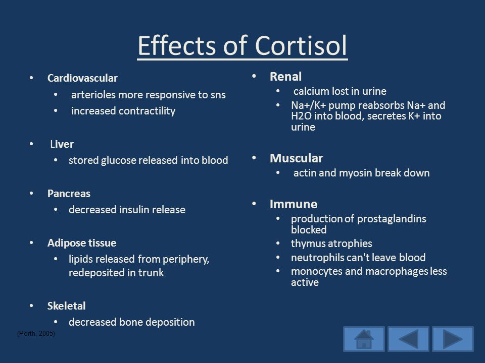 Effects of Cortisol Cardiovascular arterioles more responsive to sns increased contractility Liver stored glucose released into blood Pancreas decreased insulin release Adipose tissue lipids released from periphery, redeposited in trunk Skeletal decreased bone deposition Renal calcium lost in urine Na+/K+ pump reabsorbs Na+ and H2O into blood, secretes K+ into urine Muscular actin and myosin break down Immune production of prostaglandins blocked thymus atrophies neutrophils can t leave blood monocytes and macrophages less active (Porth, 2005)