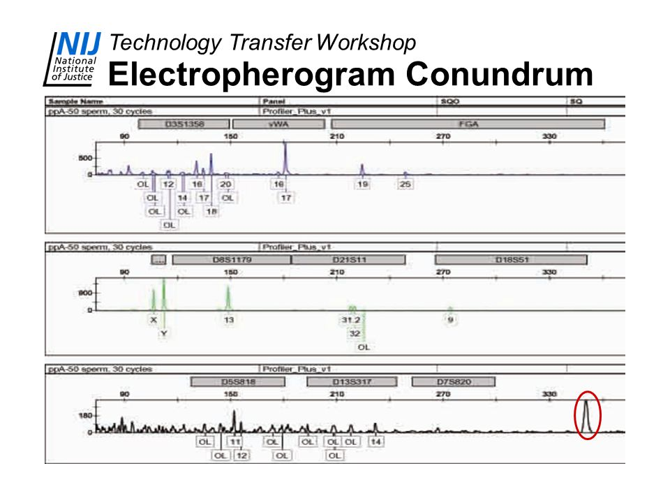 Technology Transfer Workshop Electropherogram Conundrum