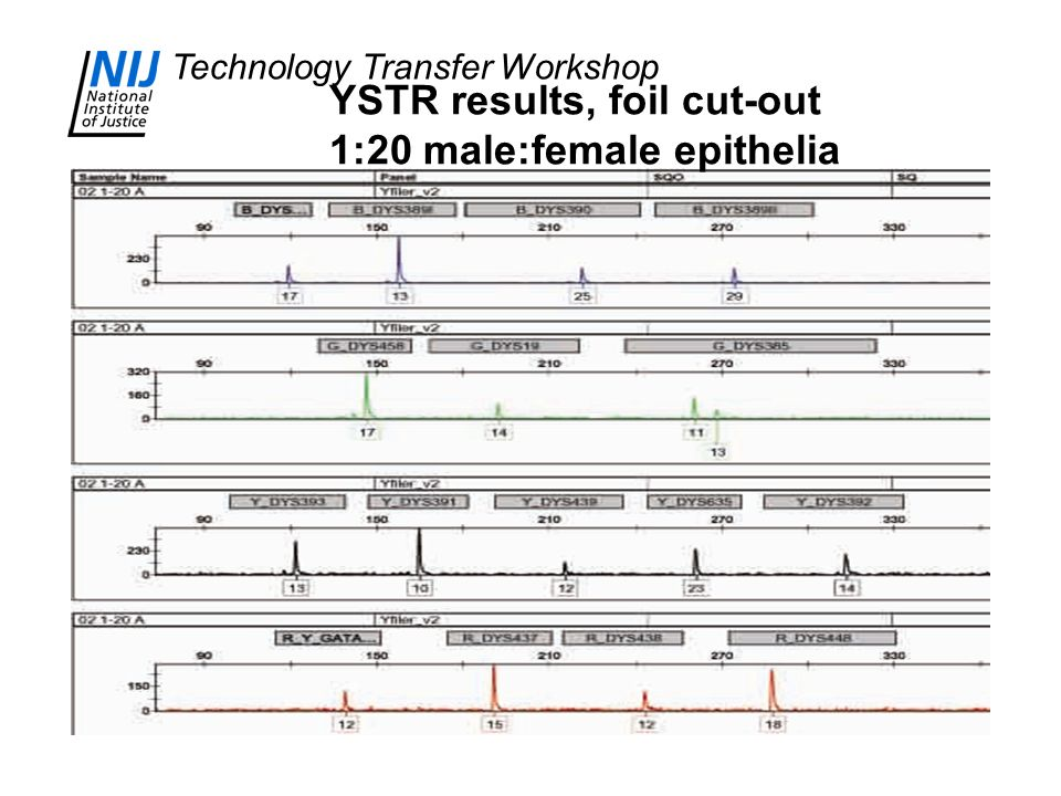 Technology Transfer Workshop YSTR results, foil cut-out 1:20 male:female epithelia