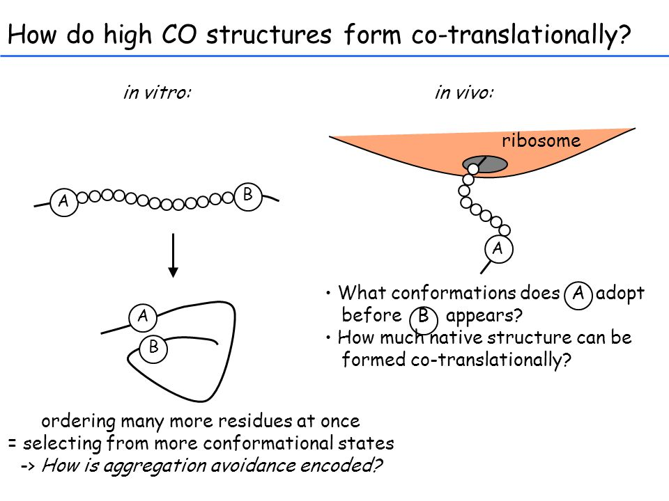 How do high CO structures form co-translationally.