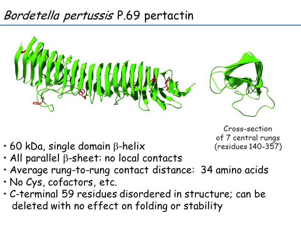 Bordetella pertussis P.69 pertactin 60 kDa, single domain  -helix All parallel  -sheet: no local contacts Average rung-to-rung contact distance: 34 amino acids No Cys, cofactors, etc.