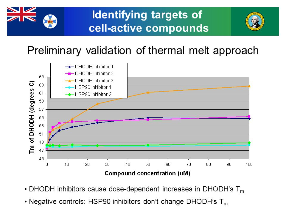 Preliminary validation of thermal melt approach DHODH inhibitors cause dose-dependent increases in DHODH's T m Negative controls: HSP90 inhibitors don't change DHODH's T m Identifying targets of cell-active compounds