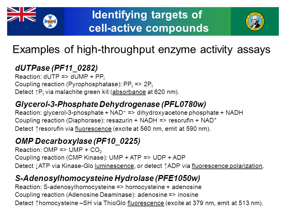 Identifying targets of cell-active compounds dUTPase (PF11_0282) Reaction: dUTP => dUMP + PP i Coupling reaction (Pyrophosphatase): PP i => 2P i Detect ↑P i via malachite green kit (absorbance at 620 nm).