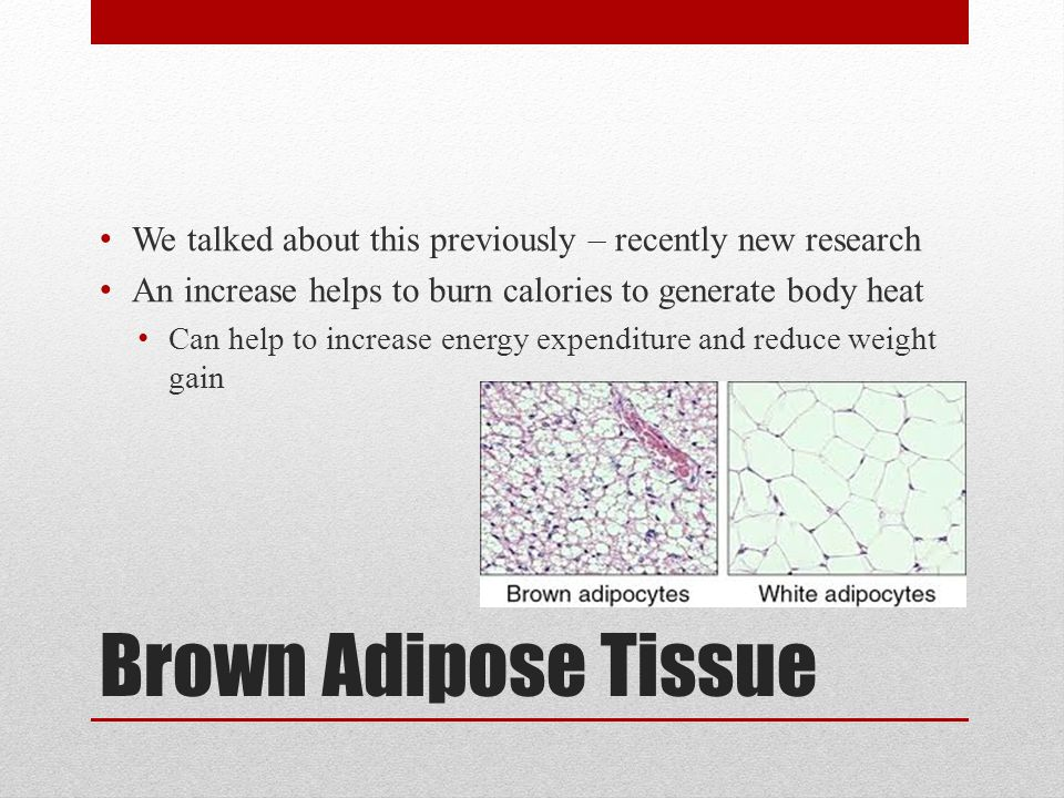 Brown Adipose Tissue We talked about this previously – recently new research An increase helps to burn calories to generate body heat Can help to increase energy expenditure and reduce weight gain