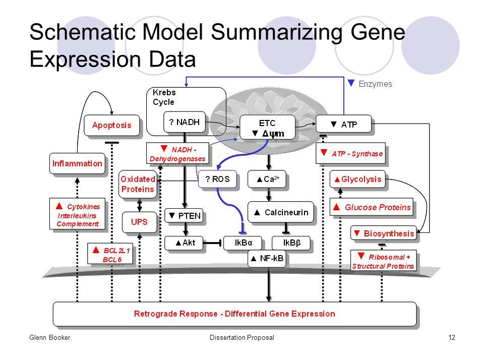 Glenn BookerDissertation Proposal12 Schematic Model Summarizing Gene Expression Data