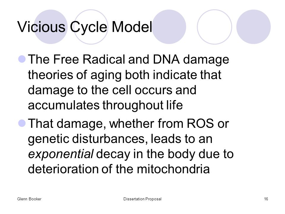Glenn BookerDissertation Proposal16 Vicious Cycle Model The Free Radical and DNA damage theories of aging both indicate that damage to the cell occurs and accumulates throughout life That damage, whether from ROS or genetic disturbances, leads to an exponential decay in the body due to deterioration of the mitochondria