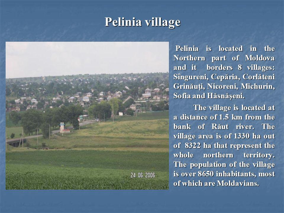 Pelinia village Pelinia is located in the Northern part of Moldova and it borders 8 villages: Sîngureni, Cepăria, Corlăteni Grinăuţi, Nicoreni, Michurin, Sofia and Hăsnăşeni.