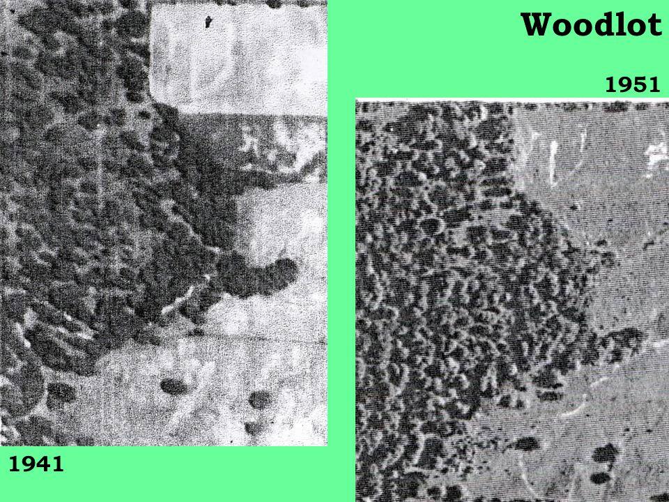 1941 1951 Woodlot