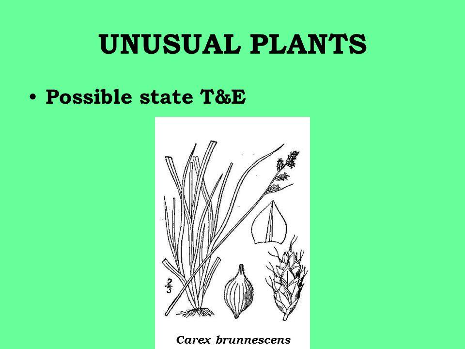 UNUSUAL PLANTS Possible state T&E Carex brunnescens