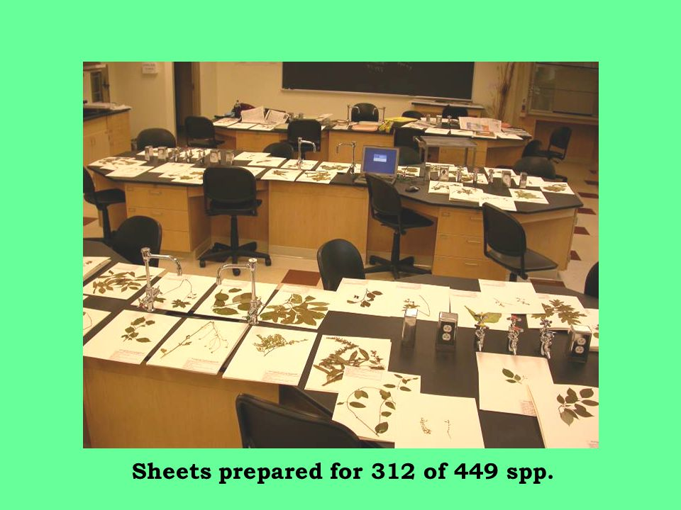 Sheets prepared for 312 of 449 spp.