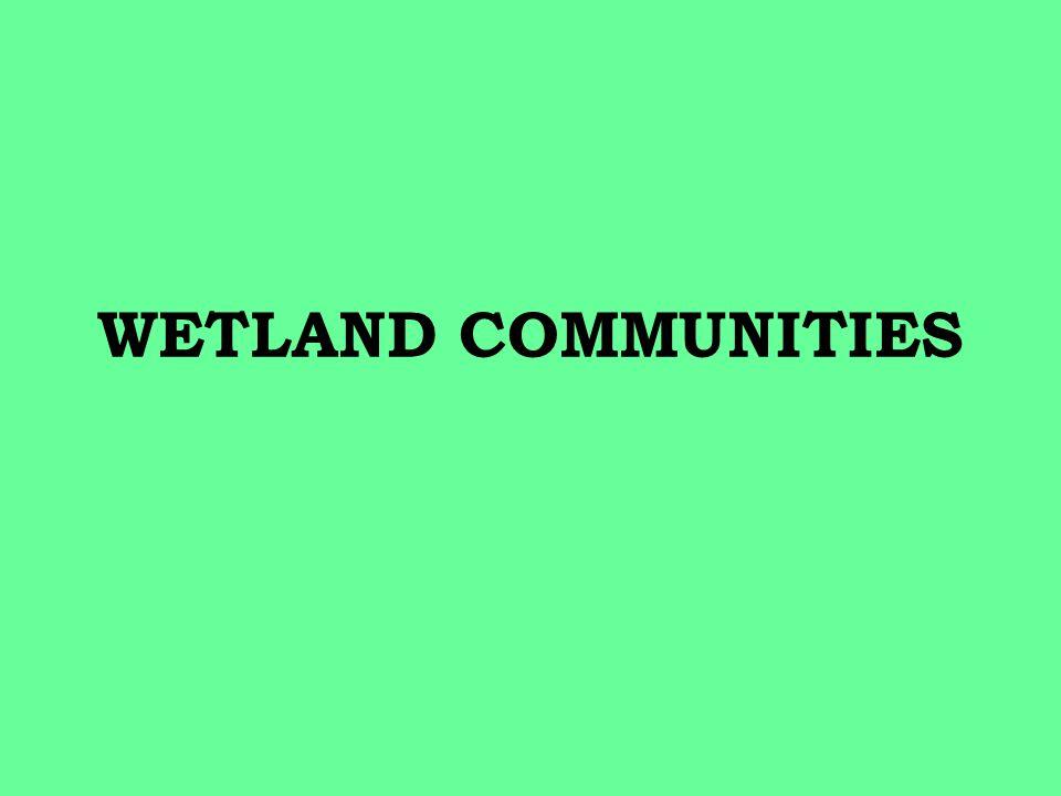 WETLAND COMMUNITIES