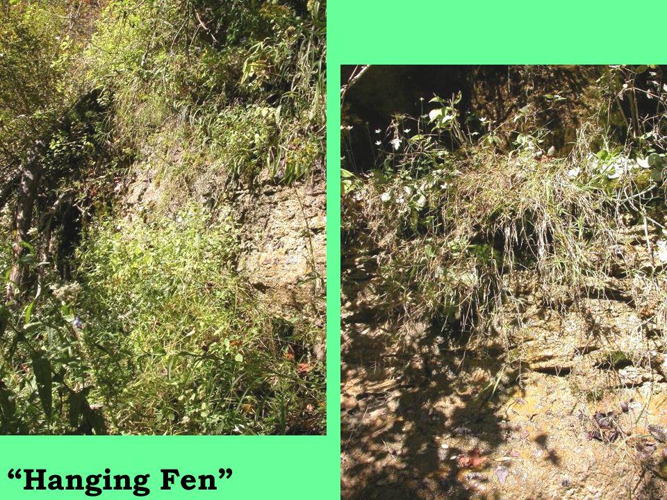 Hanging Fen
