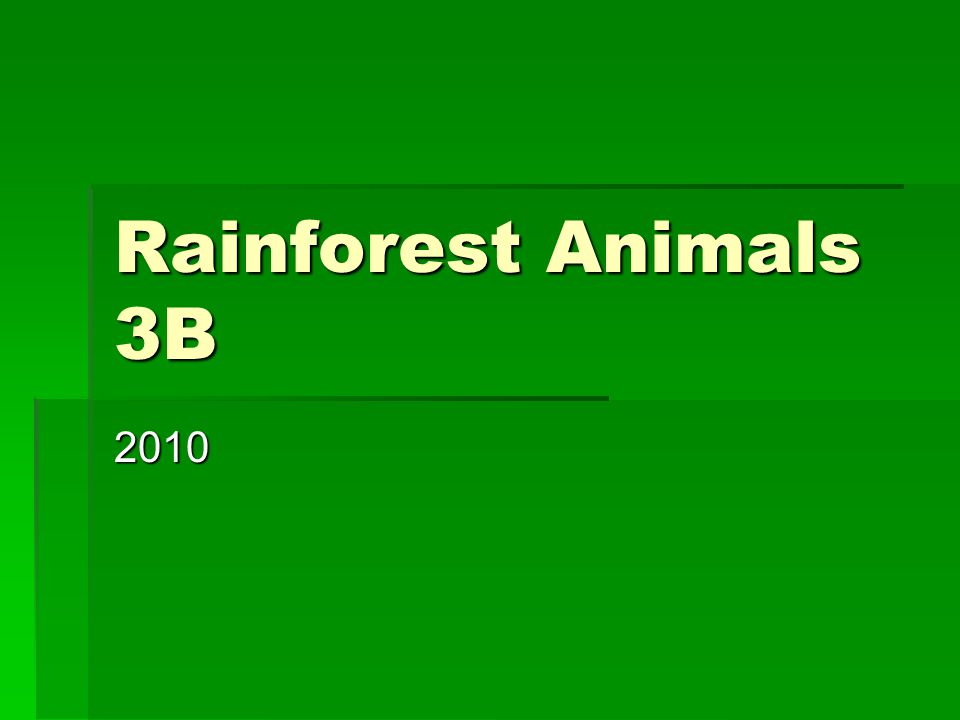 Rainforest Animals 3B 2010