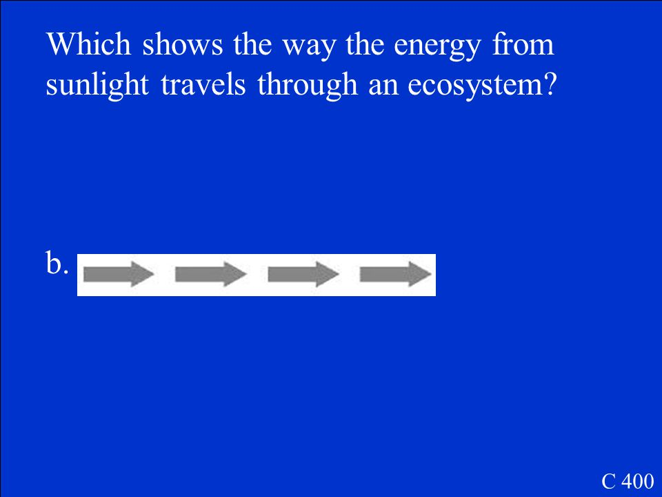 Which shows the way the energy from sunlight travels through an ecosystem.