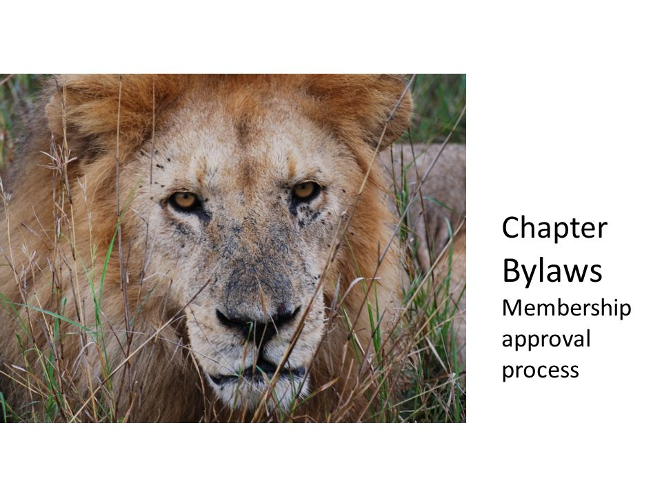 Chapter Bylaws Membership approval process