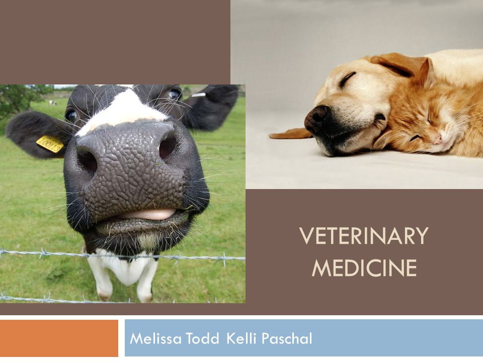 VETERINARY MEDICINE Melissa ToddKelli Paschal