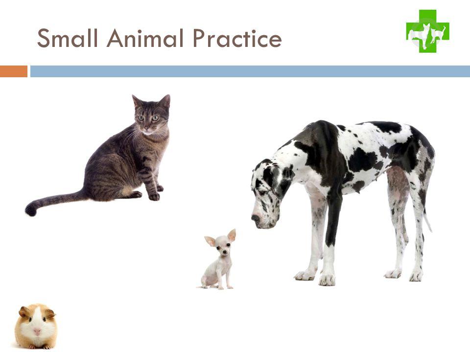 Small Animal Practice