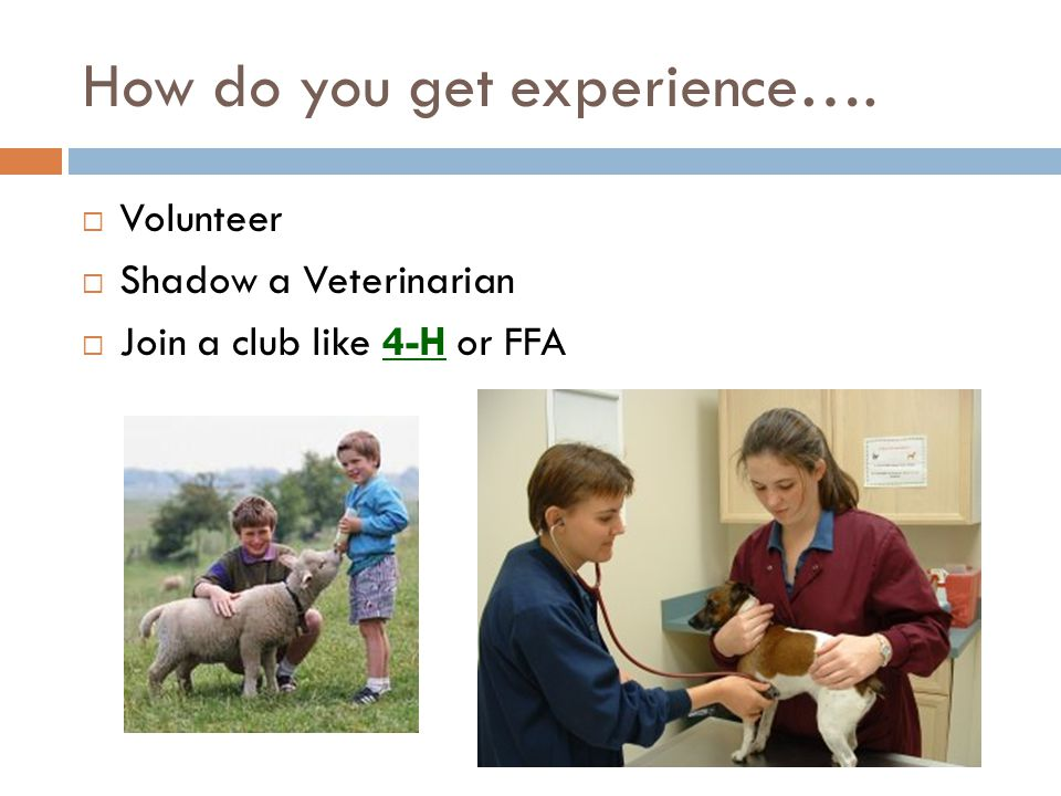 How do you get experience….  Volunteer  Shadow a Veterinarian  Join a club like 4-H or FFA