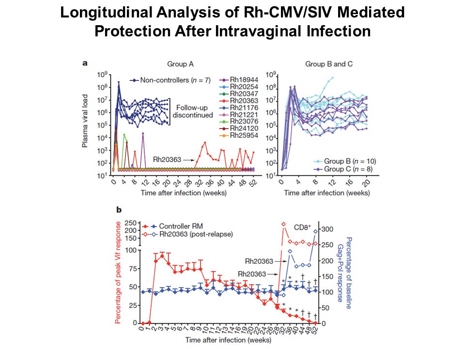 Longitudinal Analysis of Rh-CMV/SIV Mediated Protection After Intravaginal Infection