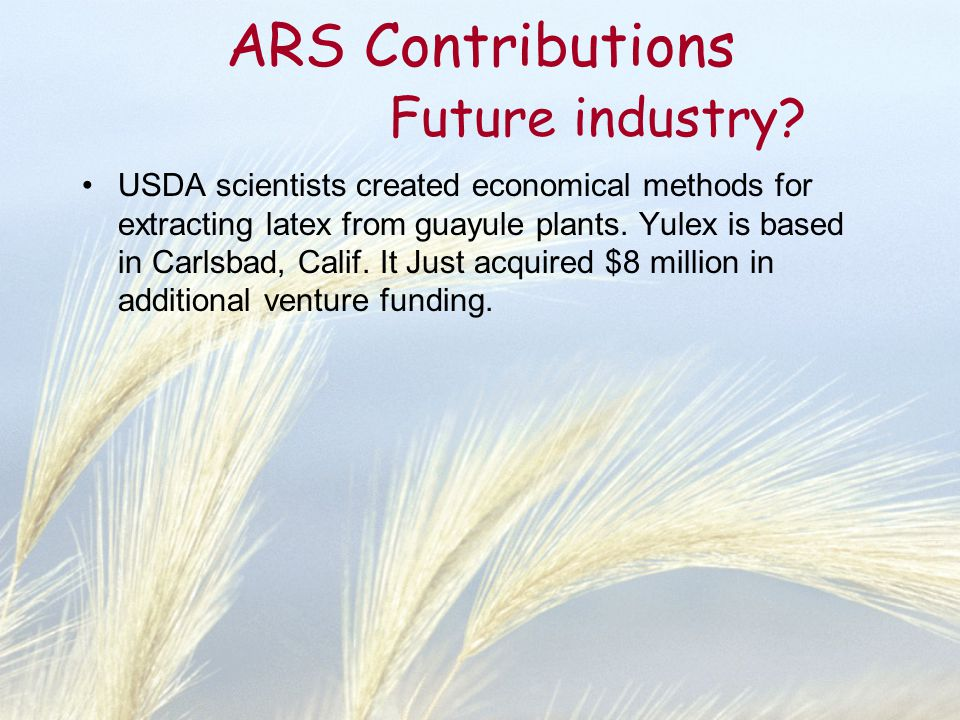 ARS Contributions Future industry? USDA scientists created economical methods for extracting latex from guayule plants. Yulex is based in Carlsbad, Ca