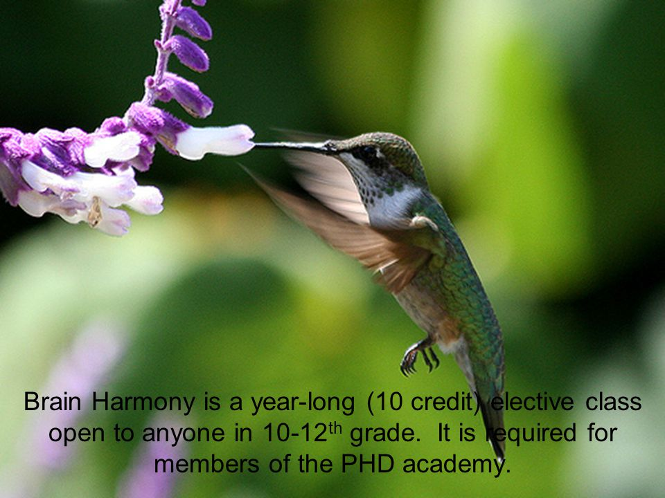 Brain Harmony is a year-long (10 credit) elective class open to anyone in 10-12 th grade.