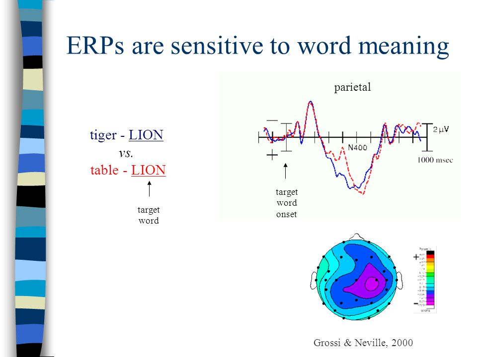 ERPs are sensitive to word meaning target word onset target word tiger - LION vs.