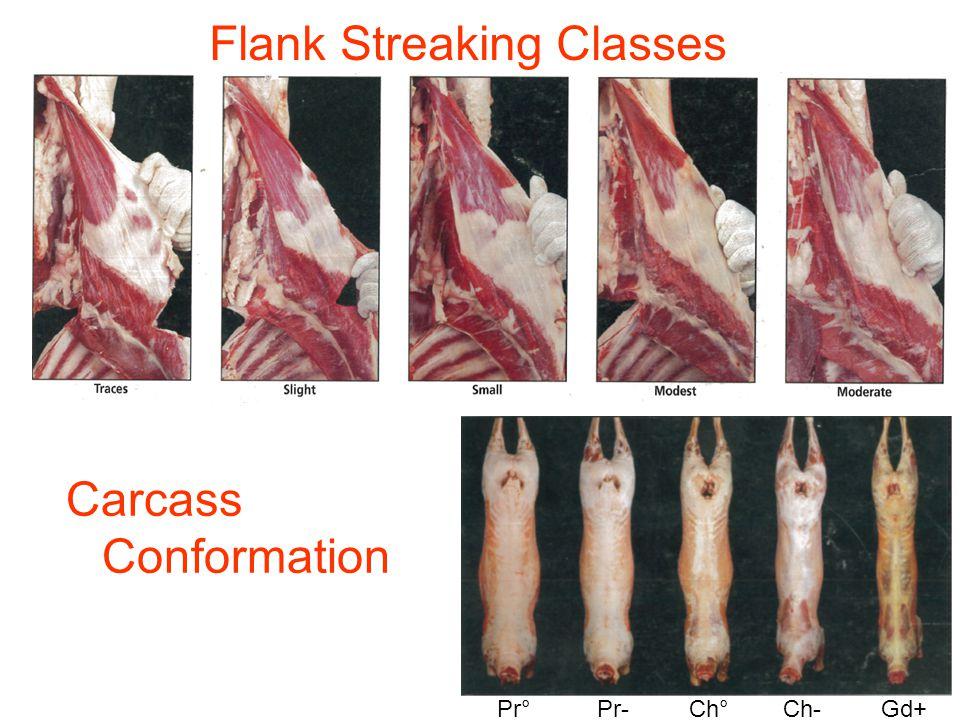 Flank Streaking Classes Carcass Conformation Pr° Pr- Ch° Ch- Gd+