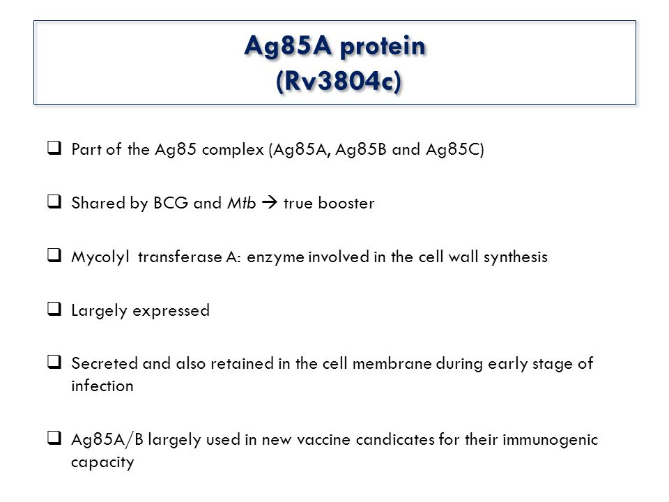 Ag85A protein (Rv3804c)  Part of the Ag85 complex (Ag85A, Ag85B and Ag85C)  Shared by BCG and Mtb  true booster  Mycolyl transferase A: enzyme involved in the cell wall synthesis  Largely expressed  Secreted and also retained in the cell membrane during early stage of infection  Ag85A/B largely used in new vaccine candicates for their immunogenic capacity