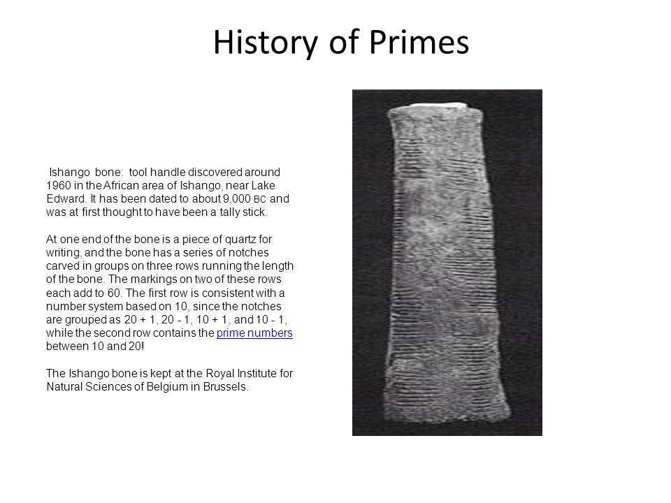 History of Primes Ishango bone: tool handle discovered around 1960 in the African area of Ishango, near Lake Edward.