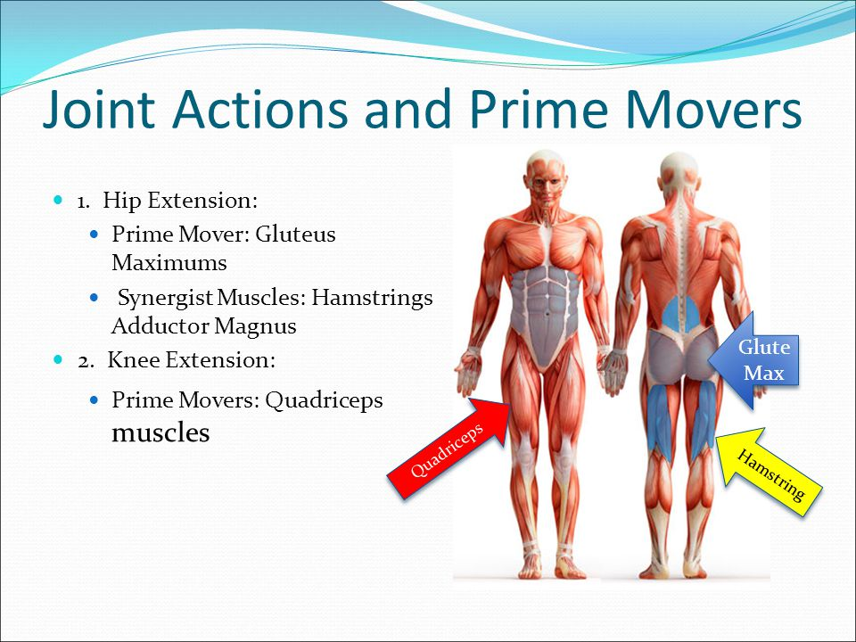 Hip Extension Hip extension is used in functional movements such as walking, jogging, sprinting, jumping, standing up, stepping up stairs, lunging, lifting objects up off the floor, etc.