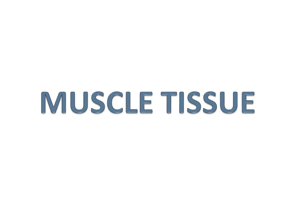 Before we go to the lab to look at the cats we need to understand how muscles are named.