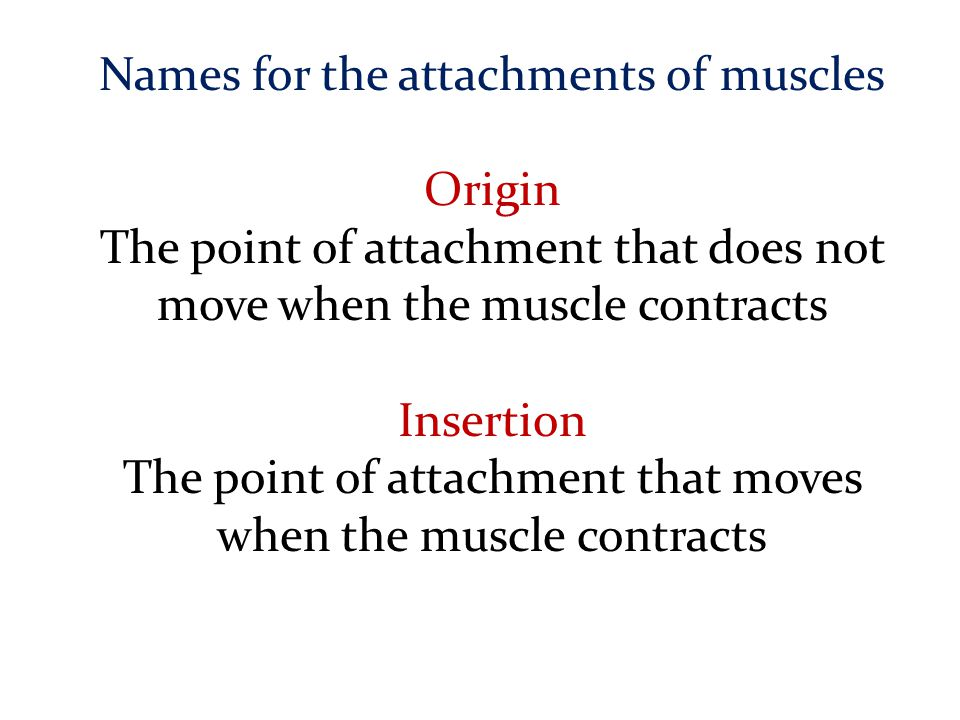 Names for the attachments of muscles Origin The point of attachment that does not move when the muscle contracts Insertion The point of attachment tha