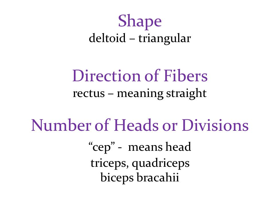 "Shape deltoid – triangular Direction of Fibers rectus – meaning straight Number of Heads or Divisions ""cep"" - means head triceps, quadriceps biceps br"