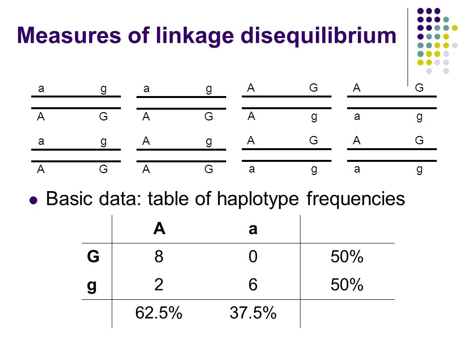 Measures of linkage disequilibrium Basic data: table of haplotype frequencies AG ag AG ag Ag AG ag AG AG ag AG Ag ag AG ag AG Aa G8050% g26 62.5%37.5%