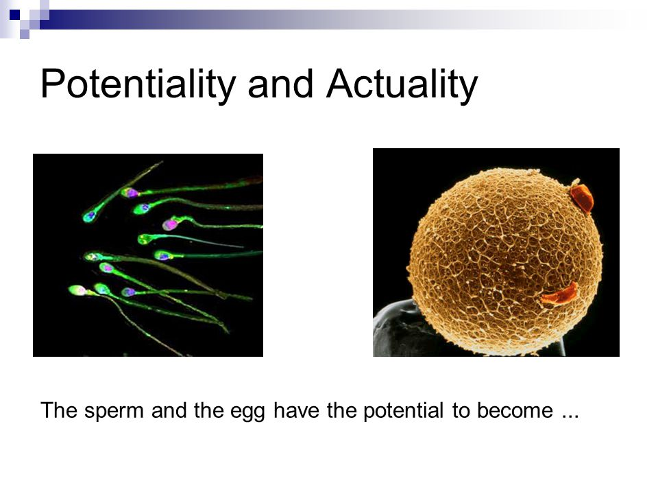 Potentiality and Actuality The sperm and the egg have the potential to become...