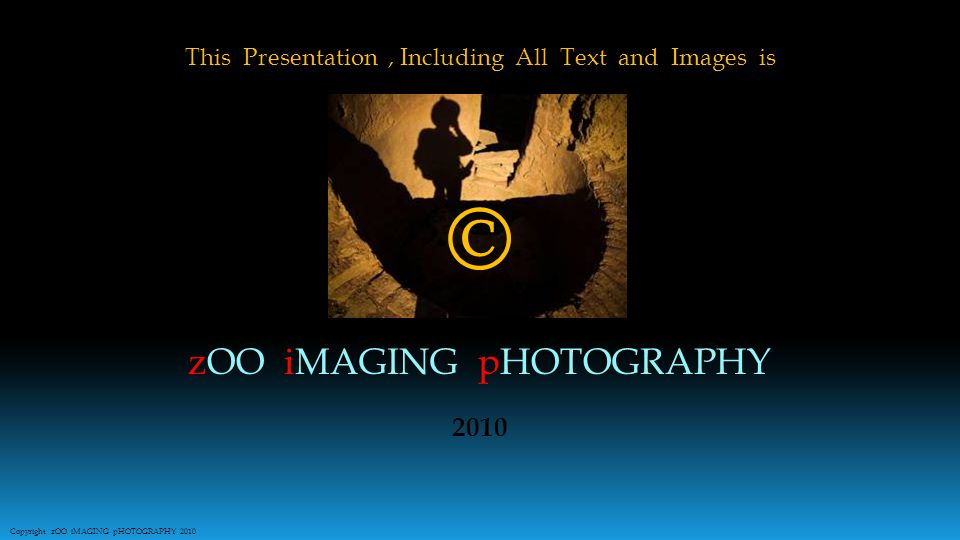 This Presentation, Including All Text and Images is zOO iMAGING pHOTOGRAPHY © 2010 Copyright zOO iMAGING pHOTOGRAPHY 2010